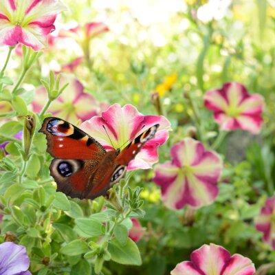 Poster Schmetterling 186
