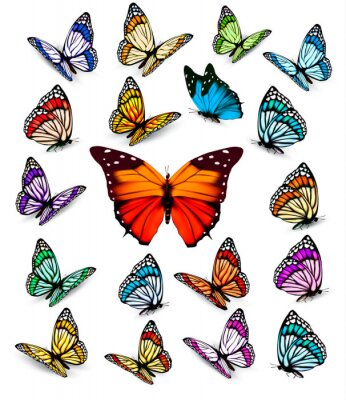 Poster Set of different colorful butterflies. Vector.