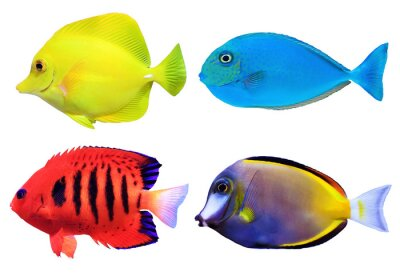 Poster Set of tropical sea fishs