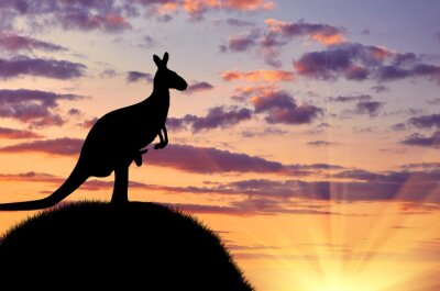Poster Silhouette of a kangaroo with a baby