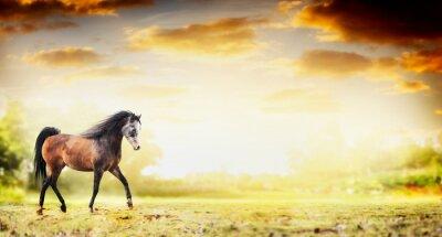 Poster Stallion horse running trot over autumn nature background, banner