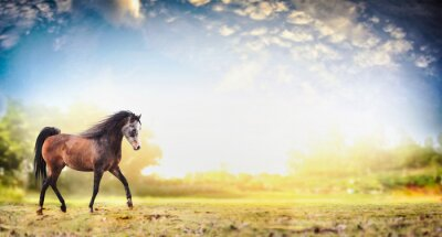 Poster Stallion horse running trot over  nature background with beautiful sky, banner