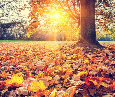 Poster Sunny autumn foliage