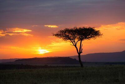 Poster Sunset in the Serengeti National Park, Tanzania, Africa