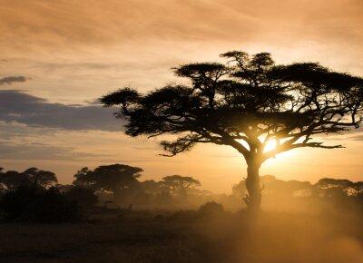 Poster Sunset on the african savannah