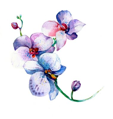 Poster the new view of orchid watercolor hand drawn for postcard isolated on the white background