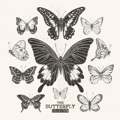 Poster The Vintage Butterfly Collection