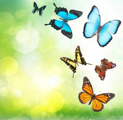 Poster Tropical butterflies in garden