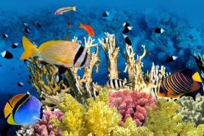 Poster Tropical Fish and Coral Reef