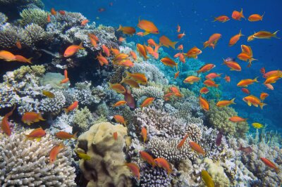 Poster Tropical Fish on coral reef