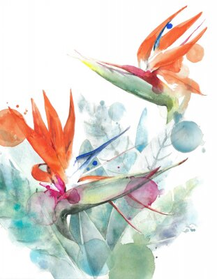 Poster Tropical flowers bird of paradise strelitzia watercolor painting illustration isolated on white background