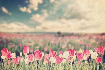 Poster Tulip flowers meadow vintage