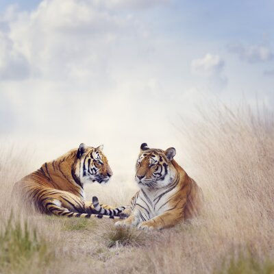 Poster Two Tigers