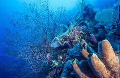 Poster Underwater coral reef
