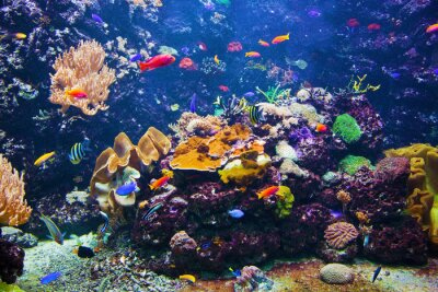 Poster Underwater scene with fish, coral reef