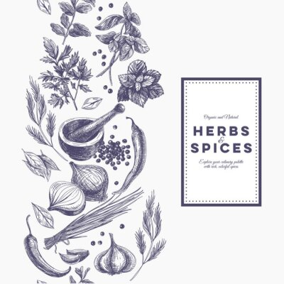 Poster Vector background with hand drawn herbs and spices.