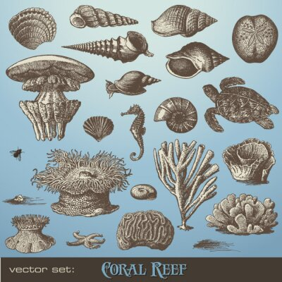 Poster vector set: coral reef - variety of sea-design elements