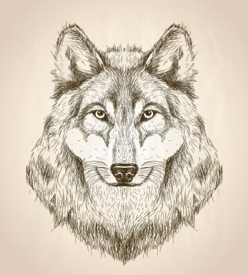 Poster Vector sketch illustration of a wolf head front view.