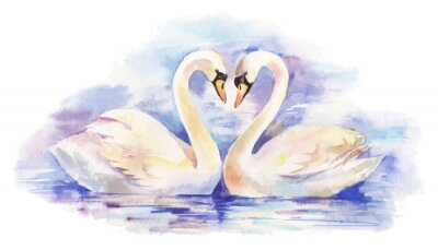 Poster vector watercolor illustration of couple of white swans