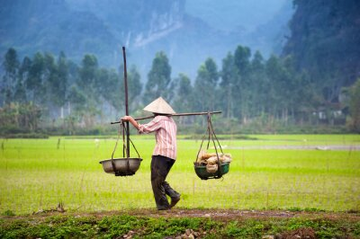 Poster Vietnamese farmer on rice paddy field in Ninh Binh, Tam Coc. Organic farming in Asia