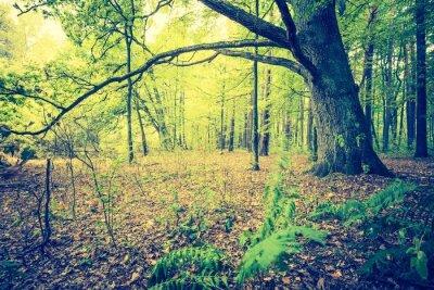 Poster Vintage photo of autumnal forest landscape