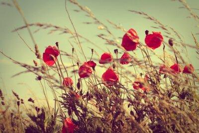 Poster vintage wild poppies