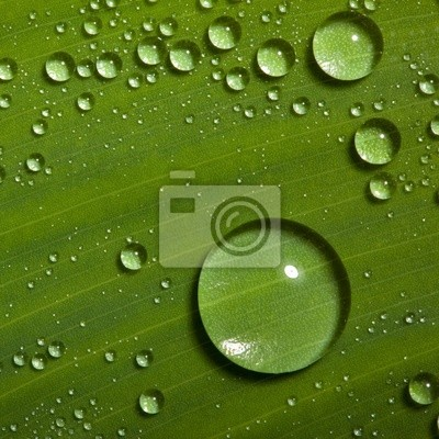 water drops on fresh green leaf posters for the wall posters
