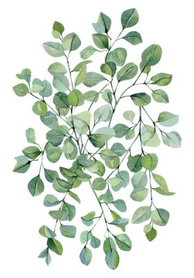 Poster Watercolor banner background with hand painted silver dollar eucalyptus. Green branches and leaves isolated.  Floral illustration for wedding inspiration card, template, print.