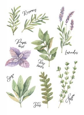 Poster Watercolor illustration. Poster with botanical green leaves, herbs and branches. Floral Design elements. Perfect for wedding invitations, greeting cards, blogs, prints, postcards