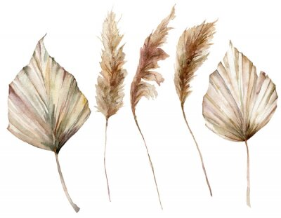 Poster Watercolor tropical set with dry palm leaves and pampas grass. Hand painted exotic leaves isolated on white background. Floral illustration for design, print, fabric or background.