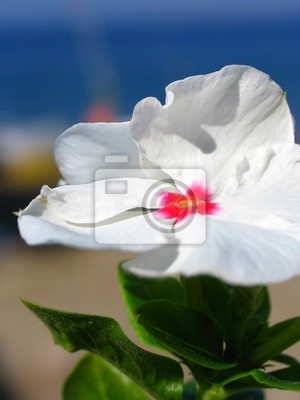 white flower 1