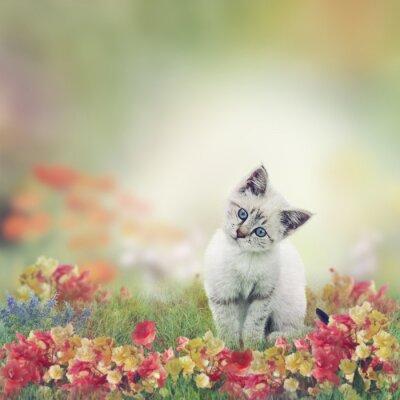 Poster White Kitten in Flowers