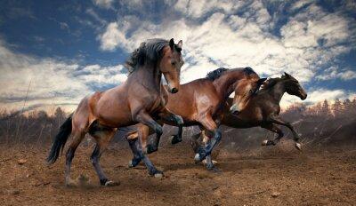 Poster wild jump bay horses