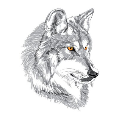 Poster Wolf muzzle sketch