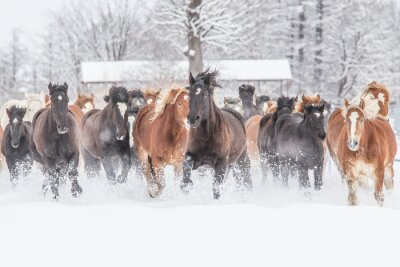Poster 冬の馬