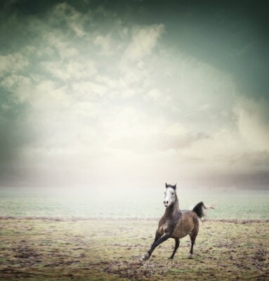 Poster Young horse running on pasture and sky background, toned
