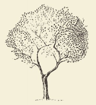 Poster Young olive tree illustration vector hand drawn