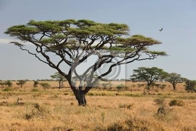 africa landscape 027 serengeti