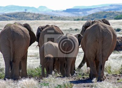 Sticker African elephants walking through Damaraland