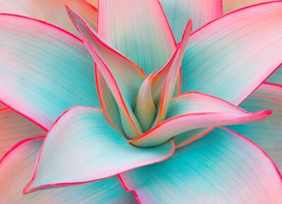 Sticker agave leaves in trendy pastel colors for design backgrounds