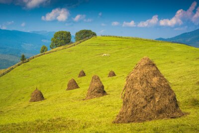 Alpine mountain valley with haystacks on a meadow