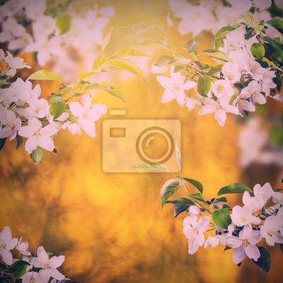 Apple blossom background_vintage_1