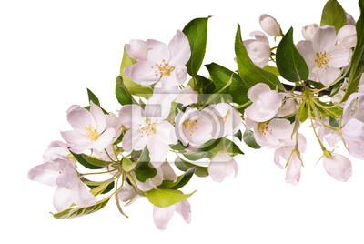Apple blossom brunch_1