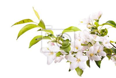 Apple blossom brunch_2