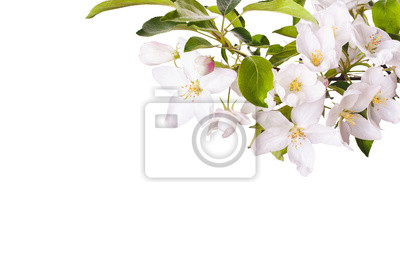 Apple blossom brunch_3