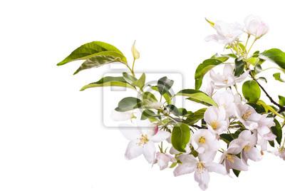 Apple blossom brunch_4