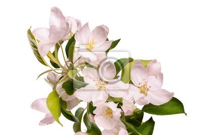 Apple blossom brunch