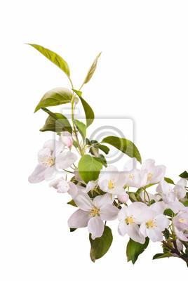 Apple blossom brunch_7