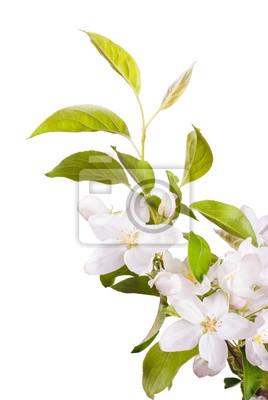 Apple blossom brunch_8