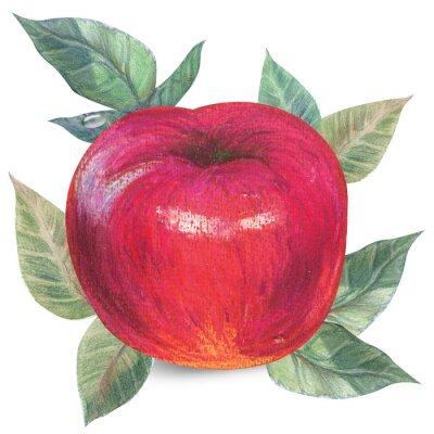 Sticker Apple on white with clipping path